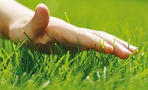 Warum eine regelmäßige Rasenpflege wichtig für einen schönen Rasen ist