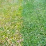 Gelber Rasen | Rasenmäher Tests