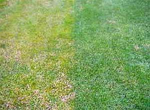 Was tun bei gelbem Rasen?