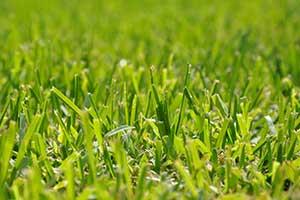 Rasen als Kriterium für den neuen Mäher