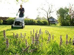Rechtliches rund um das Rasenmähen