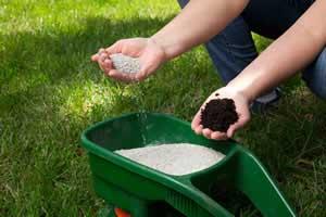 Rasen richtig düngen: So geht´s